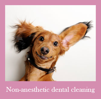 We Offer Non-Anesthetic Dental Cleanings