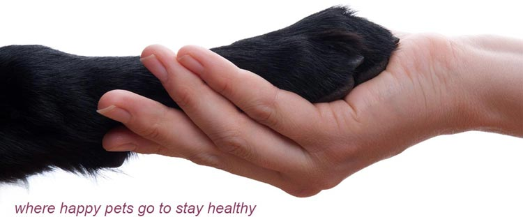 Keeping Pets Healthy and Happy